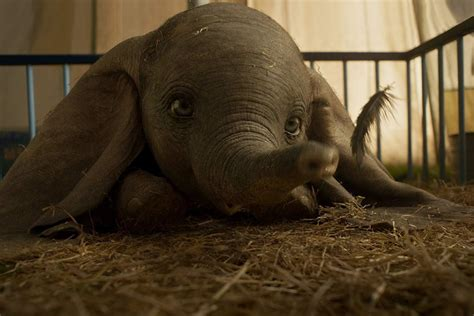 Dumbo 2019 film: Trailer, release date and cast for Tim