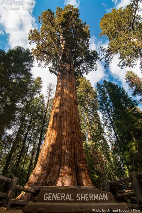 Interesting facts about Sequoia National Park   Just Fun Facts