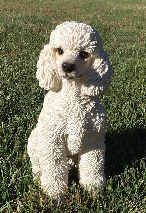 White Toy Poodle Dog Statue- 12