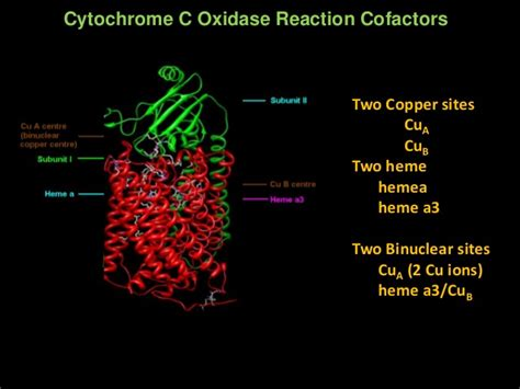 Cyt c oxidsase LECTURE