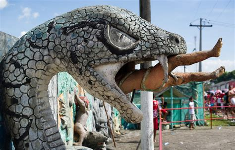 Rise of super snakes as pythons and venomous species get